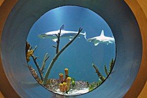 Haus des Meeres - Haitauchen