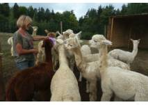Alpaca-Ranch En Colores Bad Gams