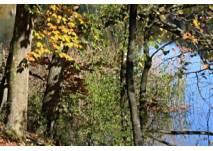Lehrpfad UferNatur in Bregenz