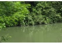 Bäume am Wasser