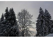 Winterwanderung in Faistenau