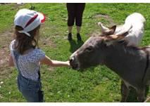 Minigolf und Tiere auf der Grill-Ranch in Deutsch-Wagram