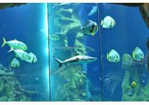 Haus des Meeres - großes Haibecken