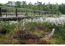 Heidenreichsteiner Moor