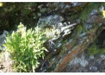 Natur-Erlebnispfad in Kals - Ökopfad für Kinder