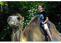 Kamelreiten im Landl