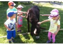Kindergeburtstag auf Hof Sonnenweide