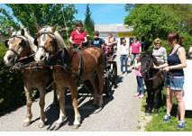 Kutschenfahrten und Ponyreiten bei Fam. Margarete Grasböck