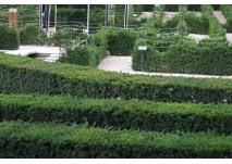 Labyrinth Schönbrunn