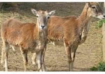 Tiere im Naturpark Geras