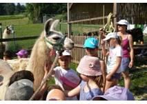 Lama-Wanderung am Elfenhof in Neusiedl bei Güssing