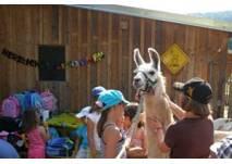 Kindergeburtstag mit Lamas am Elfenhof in Neusiedl bei Güssing
