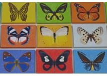 Schmetterlingswanderweg Pfarrkirchen