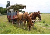 Pferdewagenfahrt in Illmitz
