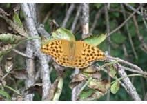 Schmetterlingspfad am Cobenzl