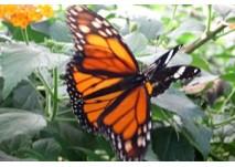 Schmetterlingslehrpfad Uttendorf