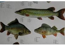 Fischlehrpfad Wilhering