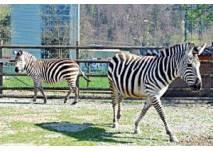Doppelmayr Zoo Wolfurt