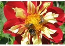 Bienen - Erlebnisweg in Zwettl an der Rodl (c) Diana