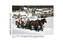 Pferdeschlittenfahrten in Wald