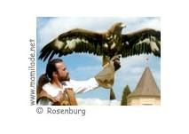 Schloss Rosenburg Greifvogel