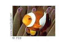 Kindergeburtstag mit Nemo im Kinderclub
