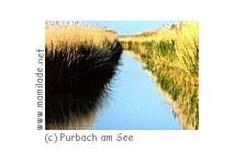 Schilflehrpfad in Purbach am See