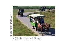 Pferde-Kutschenfahrt in Illmitz