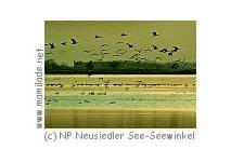 Nationalpark Neusiedlersee -  Seewinkel Gänsestrich