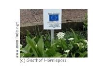 Alpenkräutergarten/Pfad der Sinne am Hörnlepass bei Riezlern