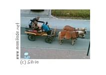 Pferdekutschenfahrt in Bad Tatzmannsdorf