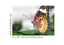 Schmetterlingslehrpfad in Markt Neuhodis
