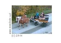 Mittersill Pferdeschlittenfahrt