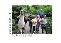 Lamawanderung zum Kindergeburtstag in Donnerskirchen