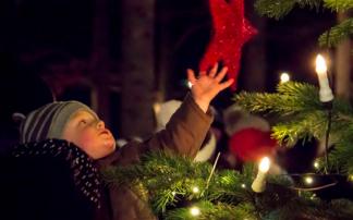 Waldweihnacht beim Baumkronenweg in Kopfing / Sauwald
