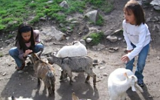 Hobby-Farm Schildberger in Farrach