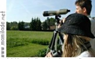Vogelbeobachtung im Moor bei Rohr