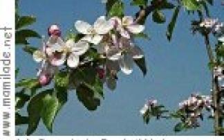 Apfelblütenfest