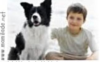 """""""Tag des Hundes""""  in der Werkstatt Natur in Marz"""