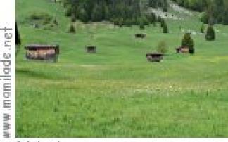Alpgang - Exkursion der inatura Dornbirn nach Au-Rehmen