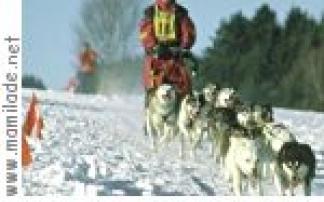 Husky Challenge in Rosenau