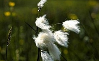 Nationalpark Kalkalpen Themenweg Wollgras