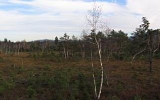 Köstendorf Wenger Moor