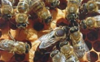 Bienenlehrpfad in Reith