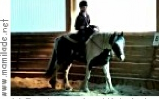 Schule: Freizeitpartner Pferd Krieglach