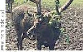 Krumbach: Wanderung zum Wildgehege