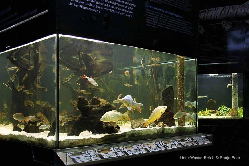 Aquarien im Unterwasserreich Schrems