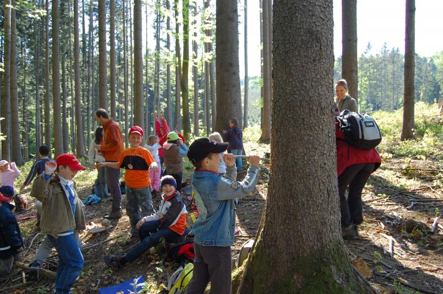 Riesi's Waldschule Bad Hall