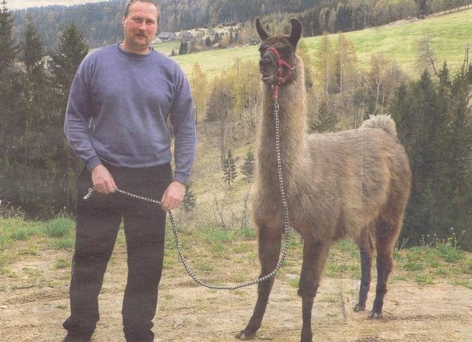 Kindergeburtstag: Wanderung mit Lamas in Hirschegg