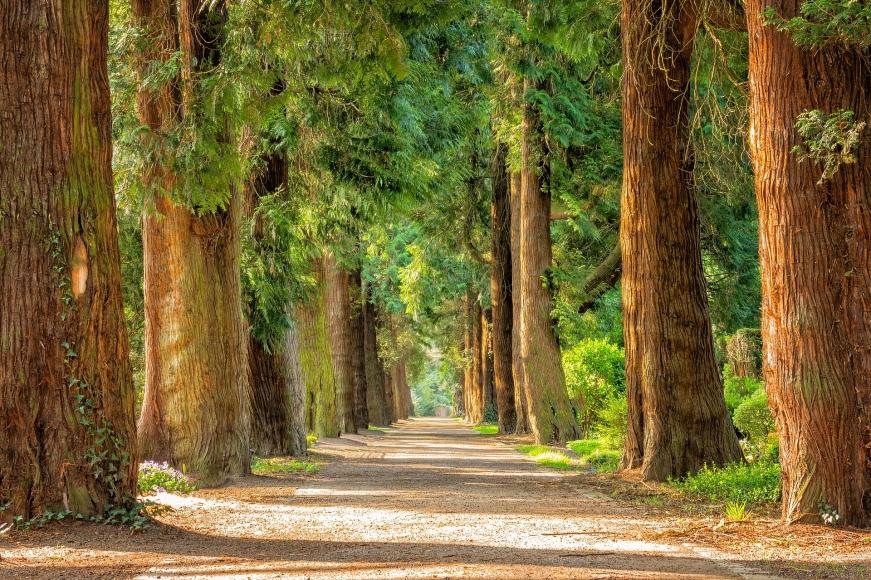 Lebensbaumpfad
